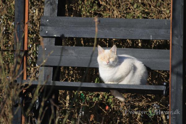 Forårs kat der slikker sol på en bænk.