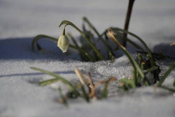 Forår trods sne og kulde