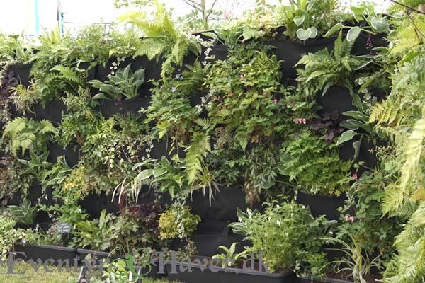 en levende plantevæge mod nor