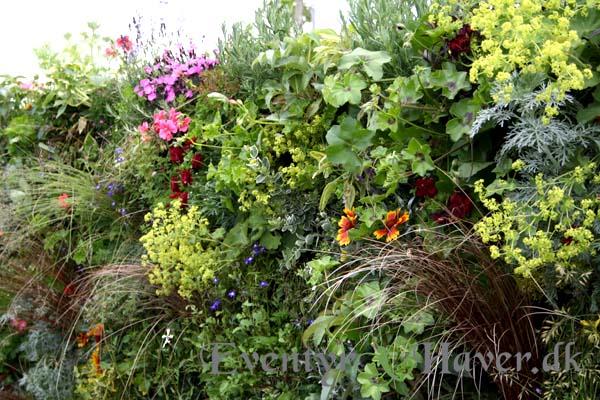 levende plantevæg mod syd, flot måde at få en vertila have