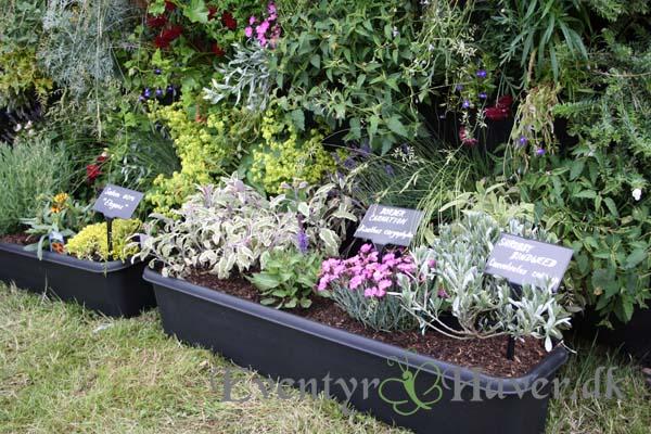 levende væg mod syd og altankasser med solelskende planter