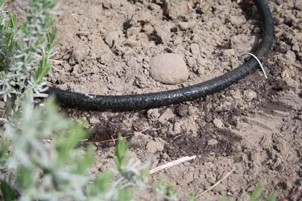 Siveslange fastgøres i jorden med spyd