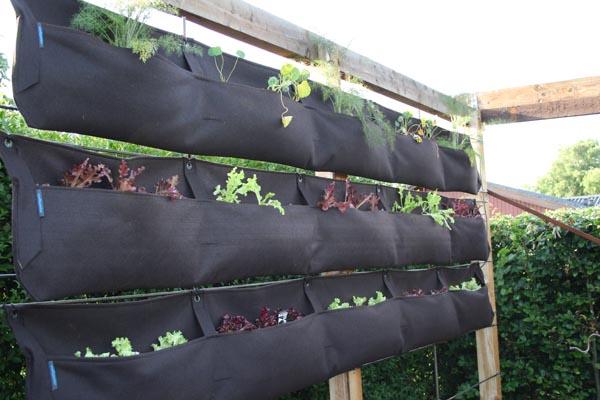 Woolly pockets plantelommer og vertikale have, som det så ud lige efter plantning