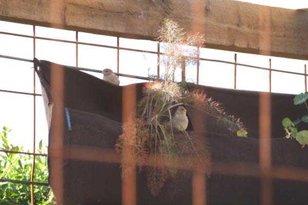 Fugle på jagt efter med i vores vertikale have, plantelommerne fra Woolly Pockets