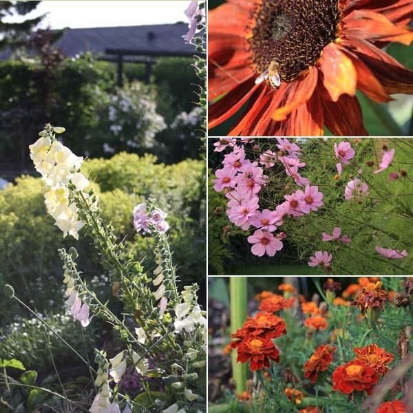Bi venlige blosmter til haven er bæredygtigt