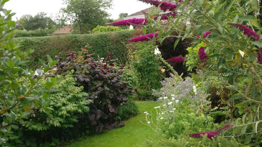 Fru Friis - skønne buske og farver sat sammen