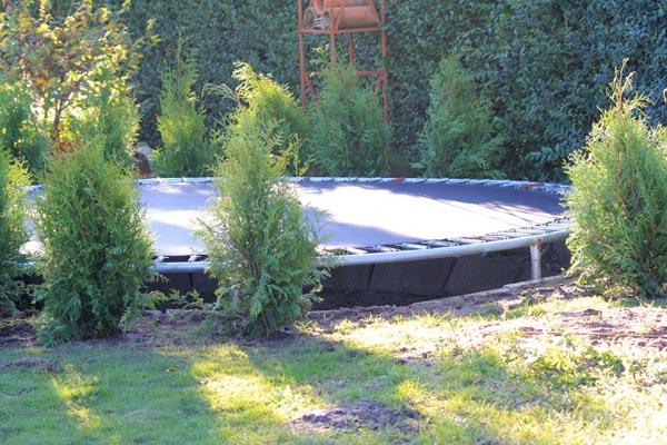 Hæk af thuja rundt om trampolinen