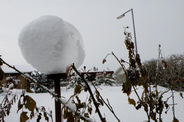 Estella med snehue