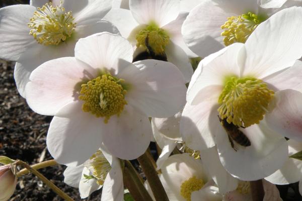 Bierne og blomster danser i solen