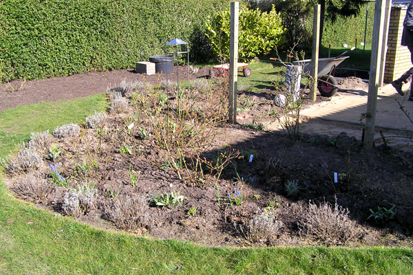 Nyt rosenbed forår 2008