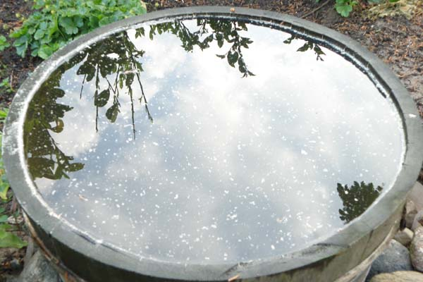 vandspejl på vores regnsvands tønde