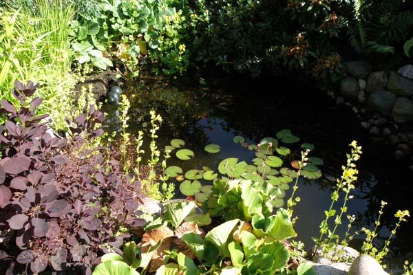 Jettes lille skønne have dam