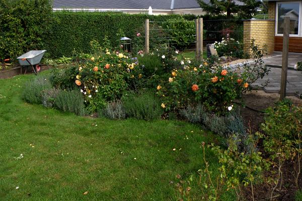 Mit nye rosenbed, anlagt i august/oktober 2007 - nu august 2008