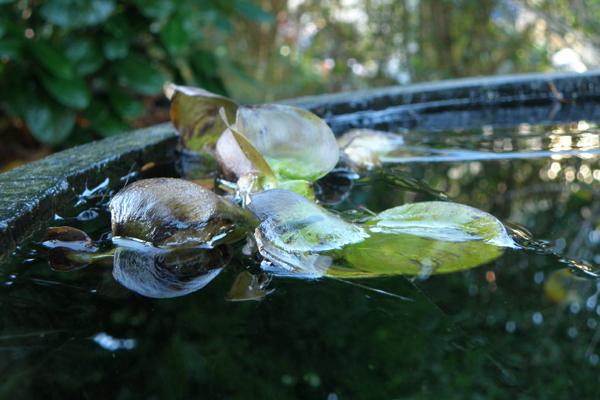vandhyasinten i smukt forfald efter frost