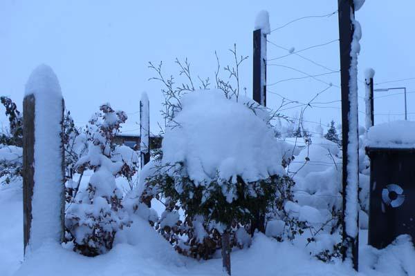 sne sne sne