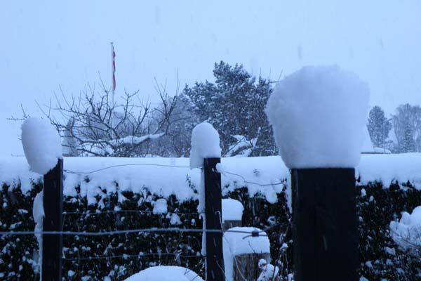 Sne på stolper og hegn