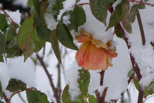 Smukt forfald og sne