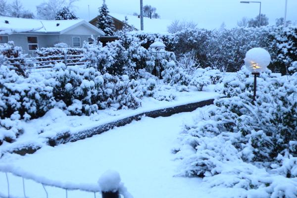Surbundsbed og rosenbed med pudder af sne