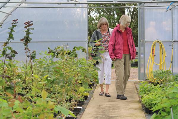 Kig på planterne i drivhuset hos Solhøj Planter