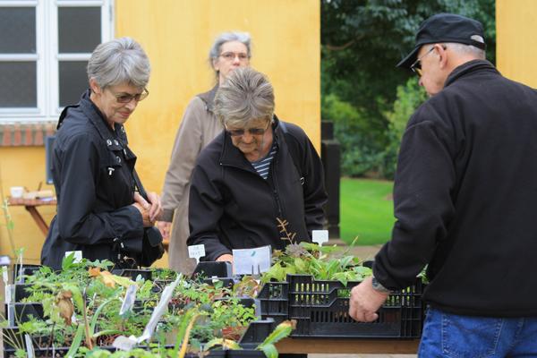 Haavens dag - Holger sælger stenbeds- og alpineplanter til havens dag hos Solhøj Planter