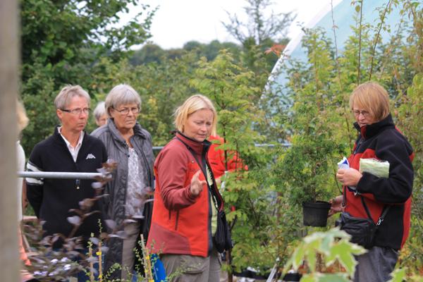 Havens dag - Linda Krogh fra Solhøj planter fortæller og vejleder kyndigt sine kunder