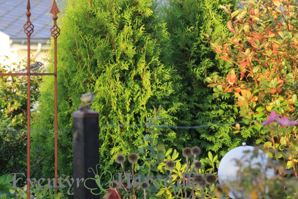Oktober i haven
