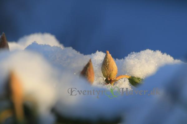 Et nyt forår på spring når vinterens sne og kulde bliver fortrængt af forår