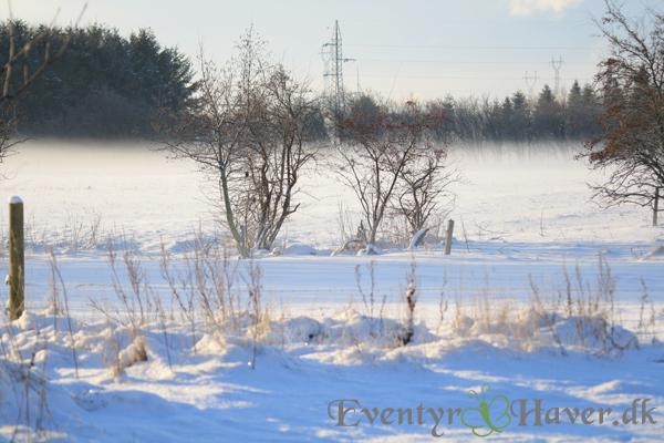 Vintersolen sørger for det smukke syn og varmedis