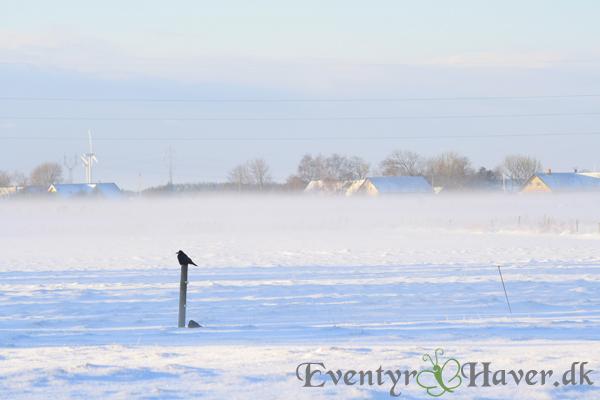 Vinterlandskab helt eventyrligt
