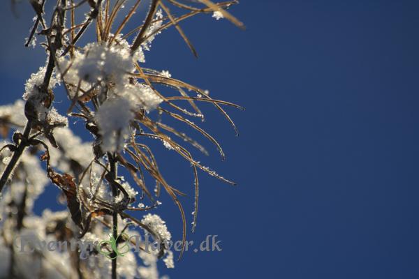 Dyb blå himmel - med sne og solskin som effekter