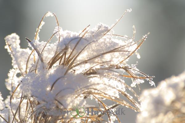 Vinterbillede i makro