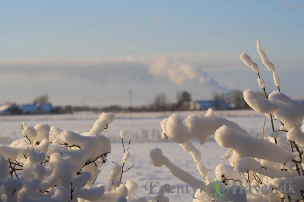 Stille frostklar formiddag ved Aalborg