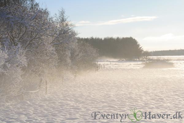 Vinterlandskabet dec 2012