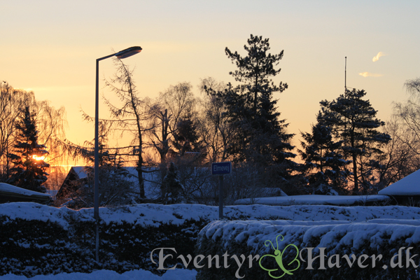 Vinter, sne og solskin