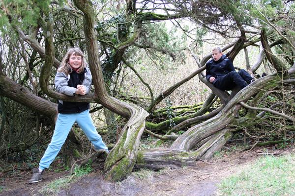 Gamle og krogede træer i fosdalen