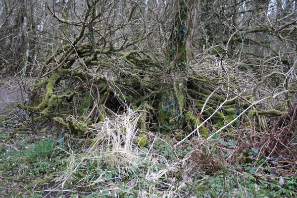 Træerne og naturen for lov at gå sin gang i Fosdalen