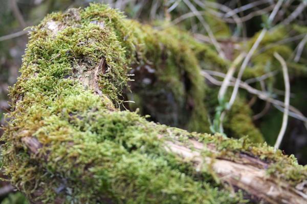 Træerne forgår med ynde i Fosdalen