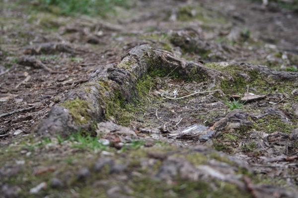 Stierne i Fosdalen er nogle steder et tæt rodnet