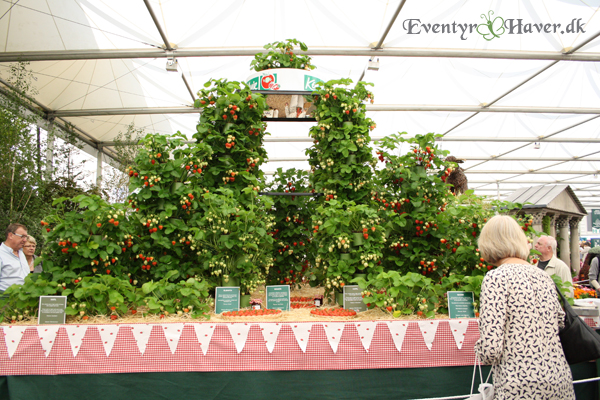 jordær -strawberris