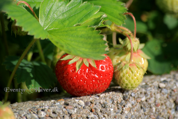 Årets første jordbær - first strawberry of the year