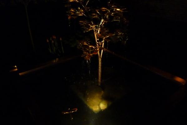 Kobbertræ med spotlys på