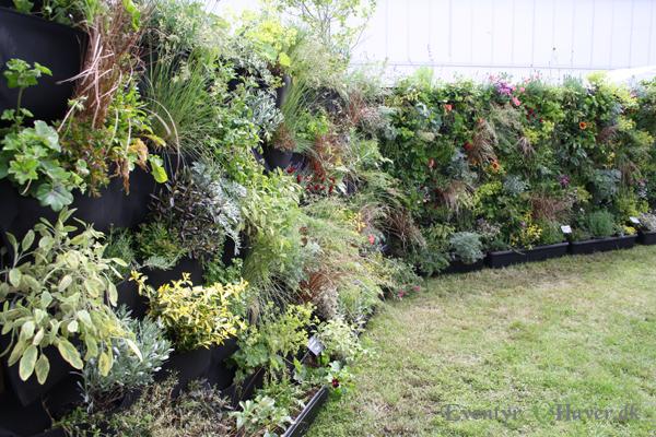 Frodige grønne planter plantet på en lodret flade.