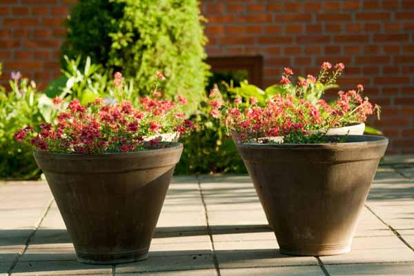 Skønne lerkruker med blomster