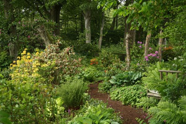 Så smukt kan det gøres i pagt med naturen at lave en skovhave