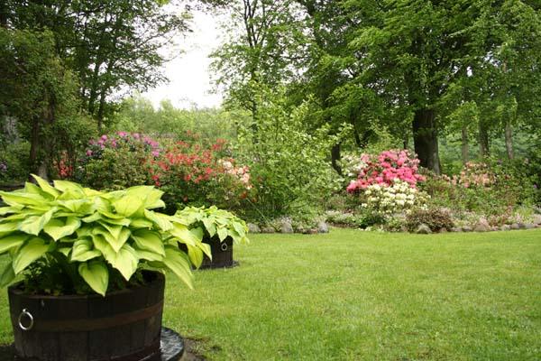 Hosater findes i mange afskygninger og størrelser i Elses have