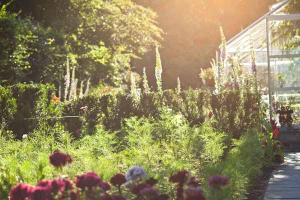 Skønt solnedgangs billede fra Merete's have