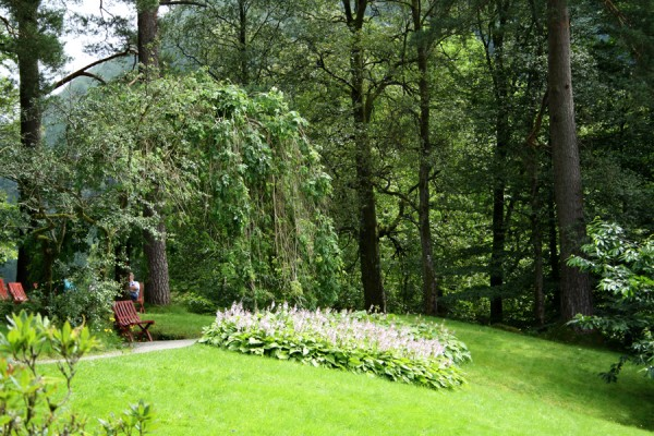 Du kan sidde og slappe af i stole under skønne hængende grene