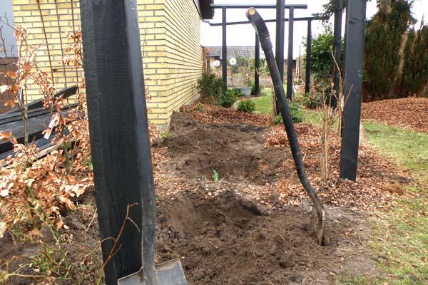Huller gravet til de nye thuja