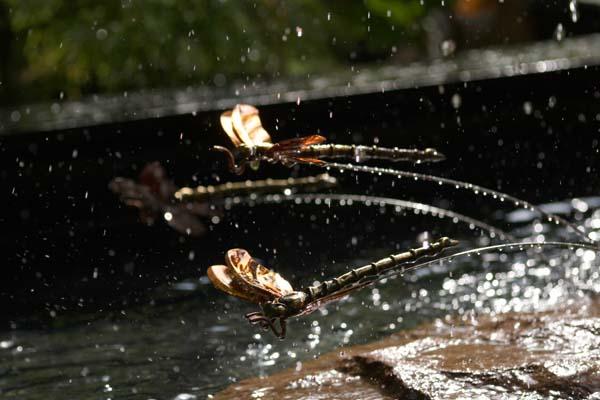 De flotte kobberguldsmede sæt i bassinet ved Halcyon springvandet