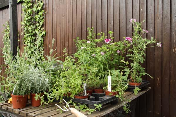 Planter købt til krukkerne i haven